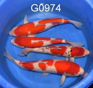 G0974 750,-, 1x1350,-