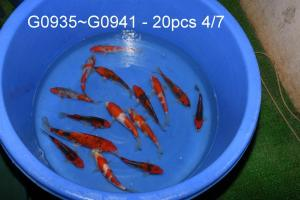 Goshiki Minuma 125€