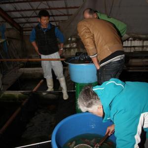 Fischen bei Nacht in Ikarashi's Halle